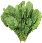 spinach_image[1]